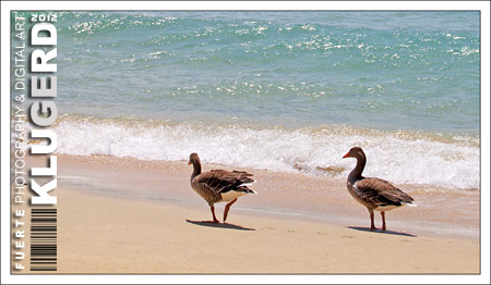 Fuerteventura - Tag 3 - Ein Tag am Strand