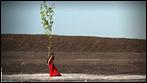 Ruhrpott | Oscar Nominierung für Wim Wenders Pina