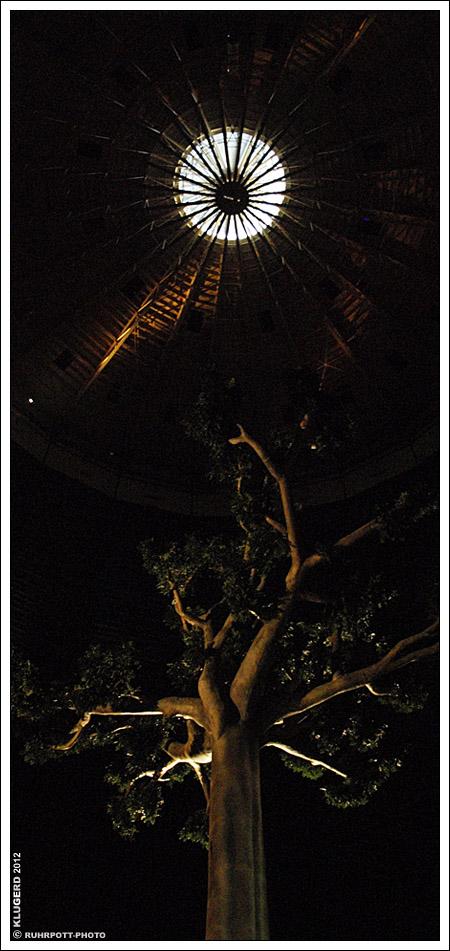 Magische Orte - Regenwaldbaum