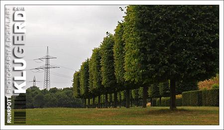 Ruhrpott | Eckige Bäume und Hecken
