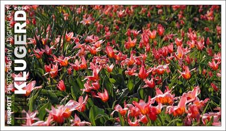 Ruhrpott | Frühling im Pott