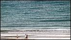 Fuerteventura - Fotos der Woche - Playa Barca (Costa Calma)