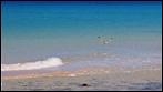 Fuerteventura - Fotos der Woche - Playa de Sotavento