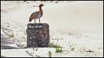 Fuerteventura - Fotos der Woche - Parque Natural de Corralejo