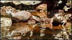 Fuerteventura - Fotos der Woche | Otter im Oasis Park :: La Lajita