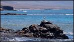 Fuerteventura - Fotos der Woche | Playa de las Pilas :: Puerto de la Cruz