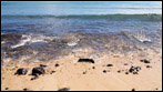 Fuerteventura - Fotos der Woche | Playa de Esquinzo