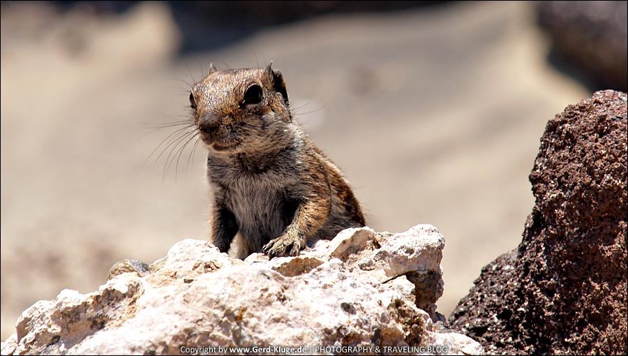 Fuerteventura :: Tag 9   Ein Streifenhörnchen zum Geburtstag
