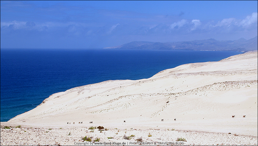 Fuerteventura :: Tag 10 | El Jable - Die Wüstenwanderung