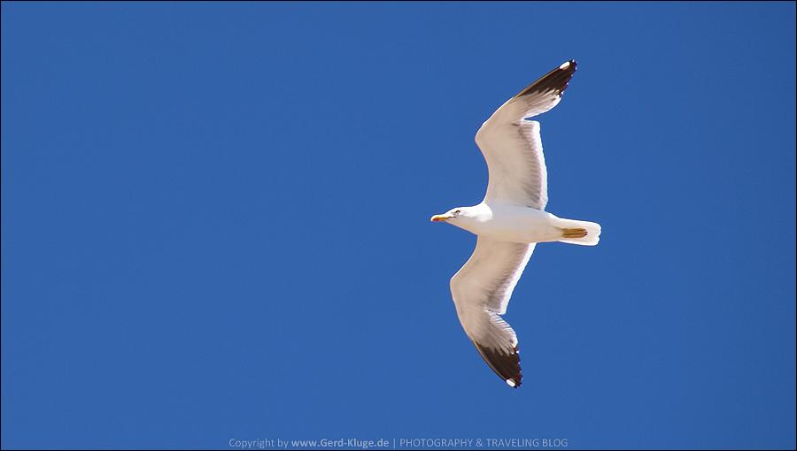 Fuerteventura :: Tag 17 | Möwen - Auch ein Thema für sich