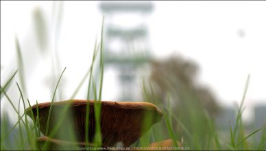 Wie Pilze aus dem Boden...