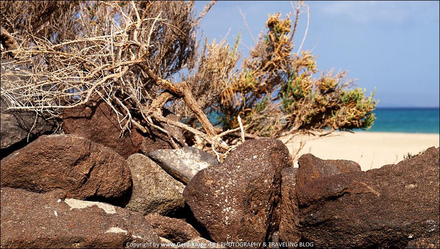 Fuerteventura :: Tag 13 | Heute nur mit Windschutz