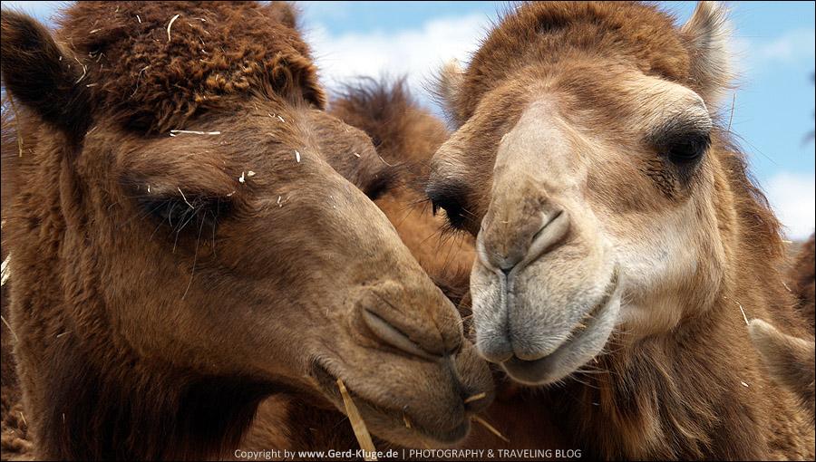 Fuerteventura :: Tag 7 | Gelassene Tiere im Oasis Park