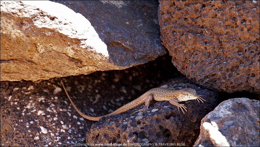 Fuerteventura :: Tag 14 | Dinosaurier unter uns