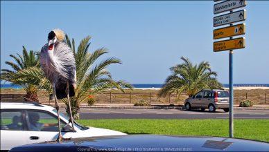 Fuerteventura :: Tag 15 | Der Vogel auf dem heißen Blechdach