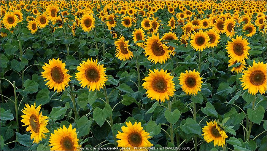 Na ja, Sonnenblumen halt