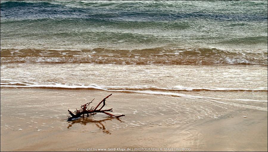 Fuerteventura :: Tag 11 | Strandgut - Playa de Sotavento