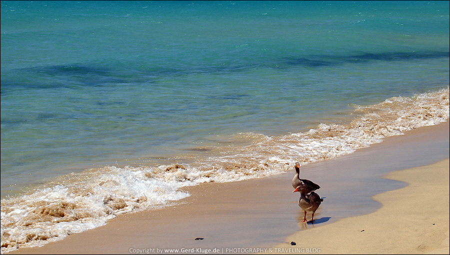 Fuerteventura :: Tag 13 | Strandläufer - Playa de Matorral