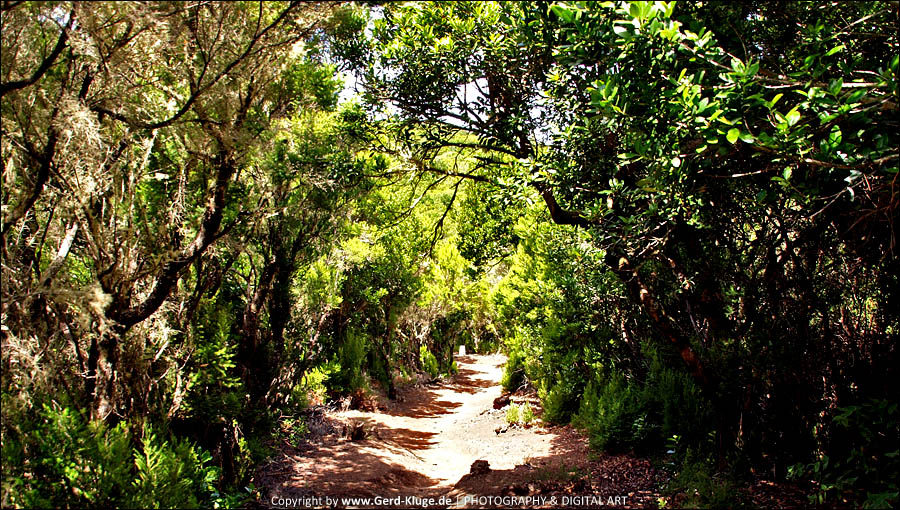 La Gomera :: Tag 3 | Die Einsteiger-Tour