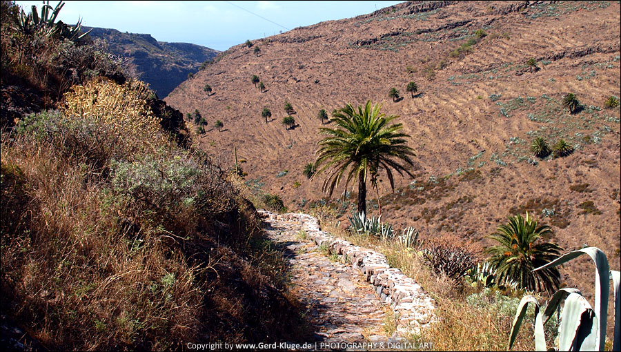 La Gomera :: Tag 4 | Drachenbaum von Agalán