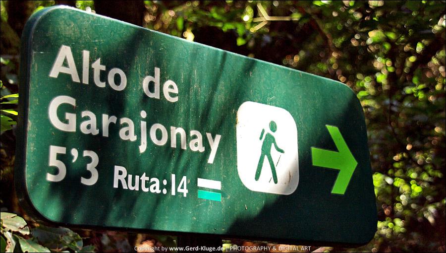 La Gomera :: Tag 5 | Aufstieg zum Alto de Garajonay