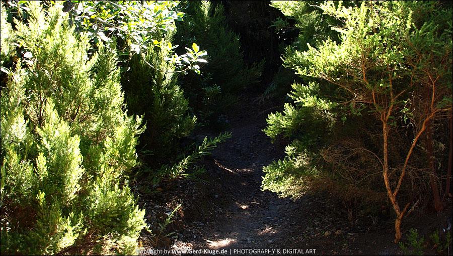 La Gomera :: Tag 7 | Rund um El Cedro oder wo ist der Weg