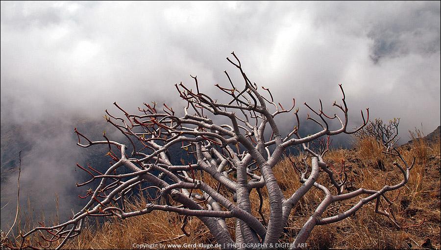 La Gomera :: Tag 15   Die Jagd nach dem Nebel