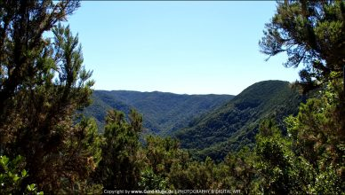 La Gomera :: Tag 17 | Parque Nacional de Garajonay