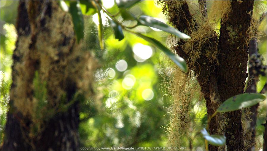 La Gomera :: Tag 17   Parque Nacional de Garajonay