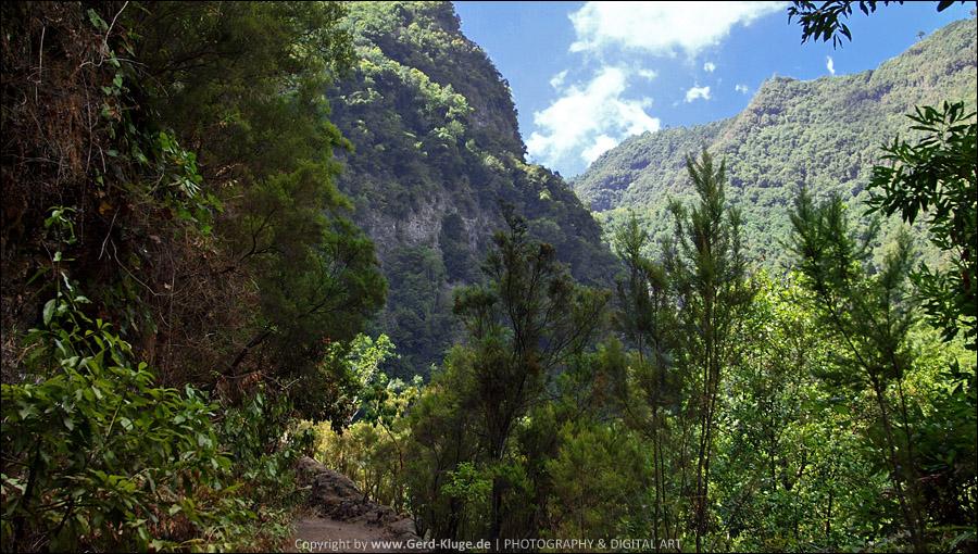 La Palma :: Tag 3 | Der Lorbeerurwald von Los Tilos