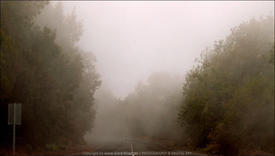 La Palma :: Tag 11 | Eine Fahrt durch die Wolken