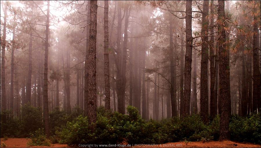 La Palma :: Tag 11 | Kiefernwald der Cumbre Vieja
