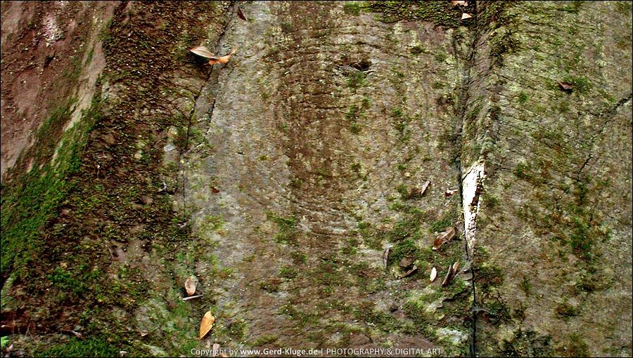 La Palma :: Tag 25   Barranco de La Zarza - Spiralen Petroglyphen