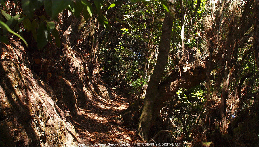 La Palma :: Tag 25   Barranco de La Zarza - Wo ist der Weg?