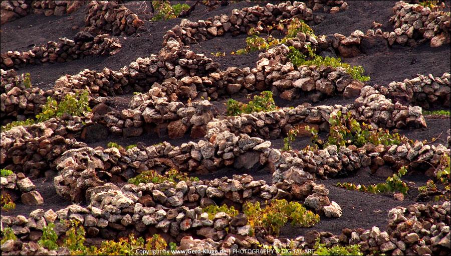 Lanzarote :: Tag 13 | Tiagua - Trockenfeldbau