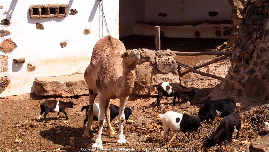 Lanzarote :: Tag 13   Tiagua - Villa Agricola El Patio - Stall