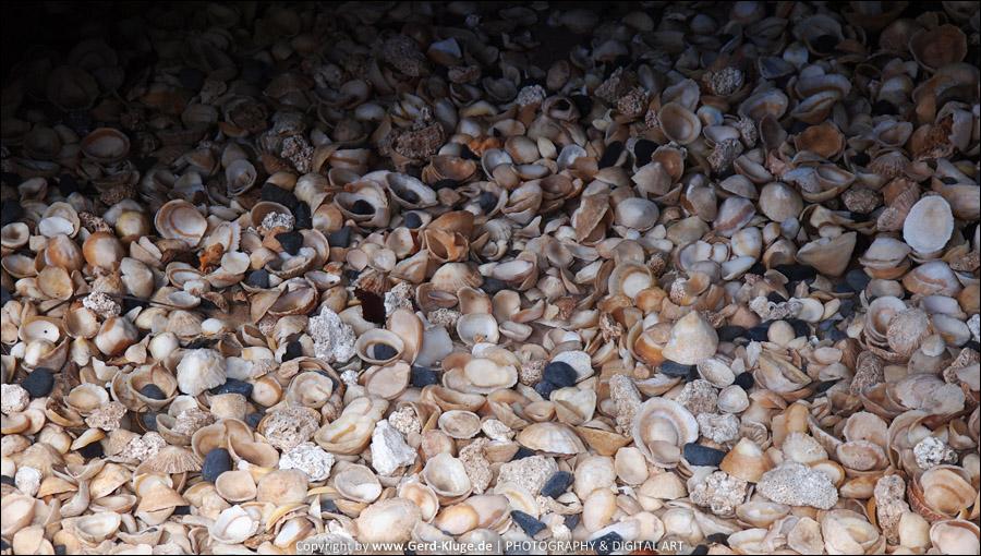 Lanzarote :: Tag 17 | Jameos del Agua - Muscheln
