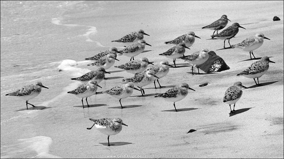 Black and White - Februar 2017 | Vögel am Strand