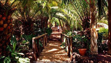 Oasis Park - La Lajita
