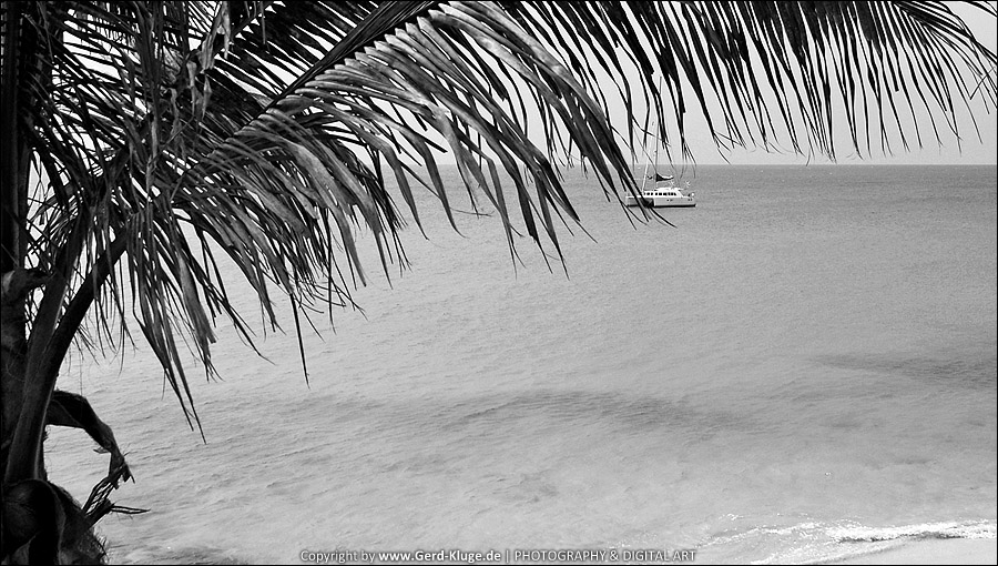 Entfärbtes Fuertenventura | Palmenblick - Playa de la Cebada