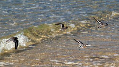 Fuerteventura :: Tag 9 | Vögel erschrecken und Quallen ausweichen