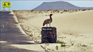 Fuerteventura :: Tag 16 | Dünen und frittierte Fischplatte