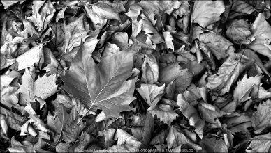 Black & White - Oktober 2020 | Der Herbst ist da…