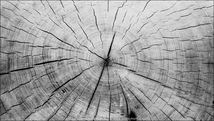 Das zerbrechliche Paradies | Baumscheibe
